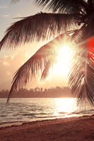 Tropical sunrise with coconut palm trees and caribbean sea .
