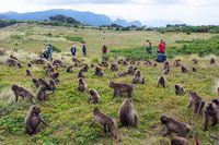 People observing baboons, Simien mountains, Ethiopia