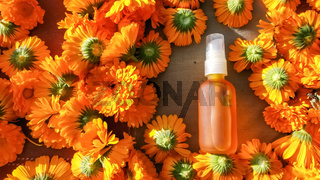 Calendula flowers placed around calendula oil