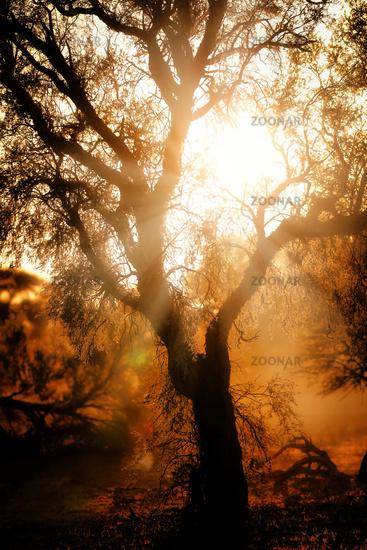Sunrise, Kgalagadi Transfrontier National Park, South Africa   sunrise, Kgalagadi Transfrontier National Park, South Africa
