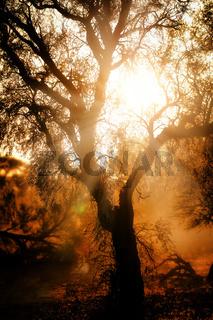 Sonnenaufgang, Kgalagadi-Transfrontier-Nationalpark, Südafrika | sunrise, Kgalagadi Transfrontier National Park, South Africa
