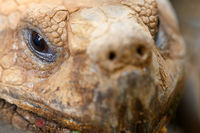 Turtle face close up image.