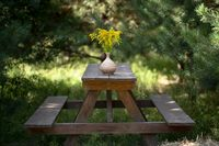 Wooden furniture in garden outdoors. Simple benches and dining table with bouquet of yellow flowers in clay vase on it. Relax concept