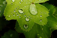close-up of water drops on a green leaf