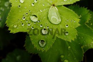 Nahaufnahme von Wassertropfen auf einem grünen Blatt