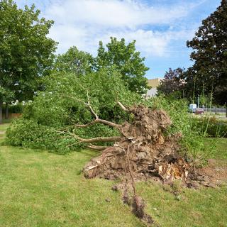 Umgestürzter Baum nach einem heftigen Sturm