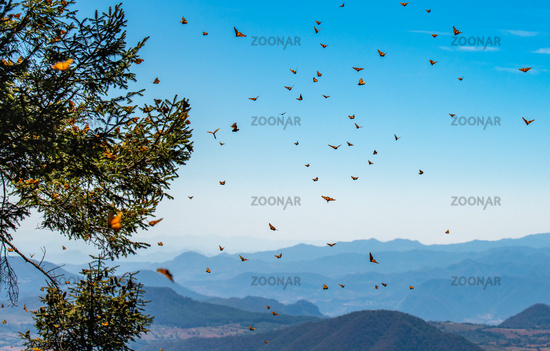 Monarch Butterfly Biosphere Reserve in Michoacan, Mexico