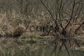 See in einem Naturschutzgebiet