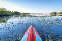 stand up paddleboard on a calm overgrown lake, paddler POV,