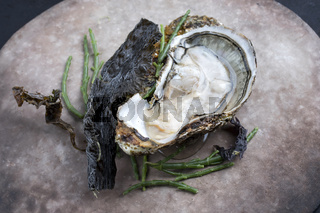 Fresh rock oyster offered as closeup opened with glasswort and algae as closeup on a modern design plate