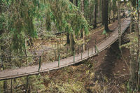 A suspension bridge in the middle of the forest.