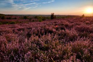 Lueneburger Heide bei Sonnenuntergang