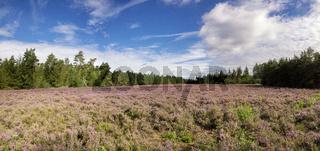 Heathland De Dellen