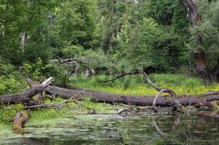 Altwasser, Nationalpark Donau-Auen, Marchegg, Oesterreich