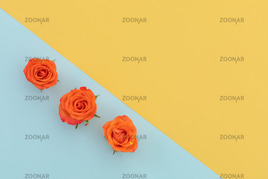 Three orange roses on blue and yellow diagonally divided background