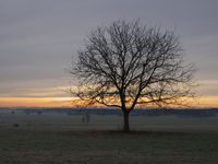 Winter dawn with tree