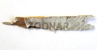 Bauholz mit Pilzbefall