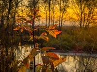 a branch with fading leaves on the shore of a small forest lake with