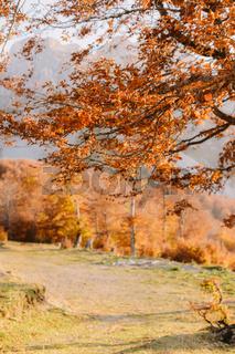 beautiful autumn forest scenery