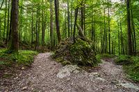 Wald mit Felsen im Berchtesgadener Land