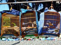 A street vendor sells birds in traditional bamboo cages