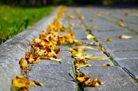 Yellow dry leaves of trees lie on the road.