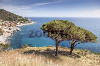 Pinie an der Westküste Elbas, Pomonte, Toskana