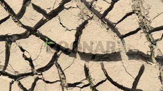Aufgerissener Boden, erstes Grün nach einer Trockenperiode, Deutschland