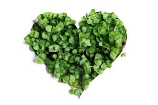 Sprout green plants heart