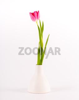 Tulips in minimalistic vase