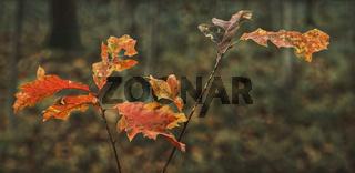 Herbst - Die letzten Blaetter am Zweig