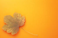 Single Autumn Maple Leaf On Orange Background