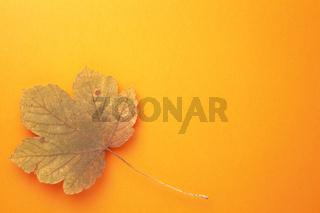 Single Autumn Maple Leaf On Orange Background