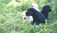 Funny little puppies on grass