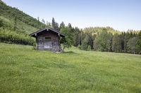 Landwirtschaftlicher Holzschuppen auf Frühlingswiese in den Voralpen, Bayern