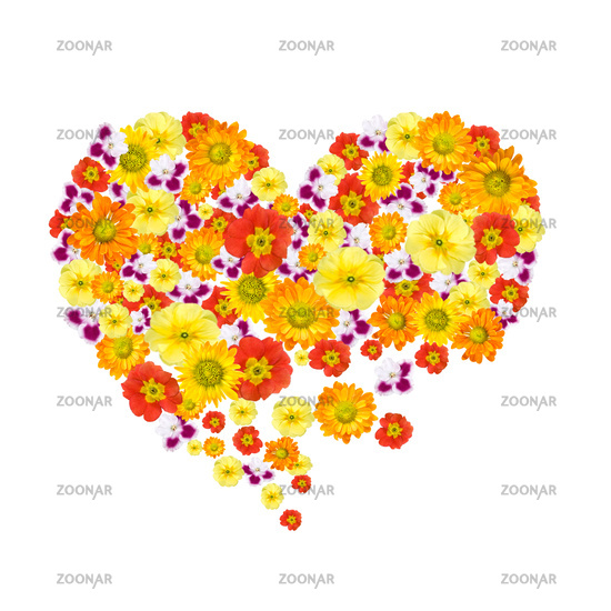 heart of color flowers isolated on white