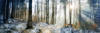 winter wald schnee bäume landschaft panorama