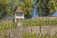 Vineyard Rapperswil-Jona, Canton of St. Gallen
