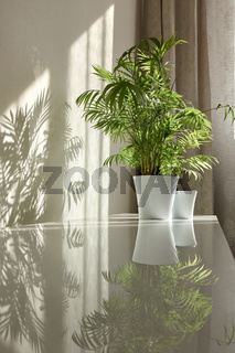 Glossy surface of desk with shadows and reflections from green houseplants.