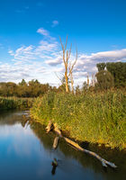Dead trees on the bank of Paar river in Bavaria, Germany