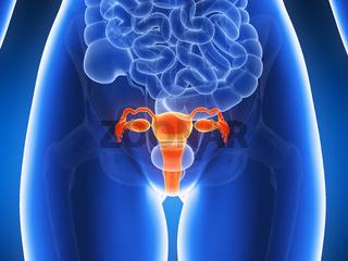 3d rendered illustration - uterus