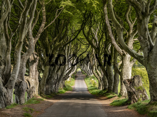 The Dark Hedges - a famous location in Northern Ireland