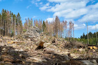 Deforestation to combat the bark beetle on the Feuersteinklippen near Schierke in the Harz Mountains