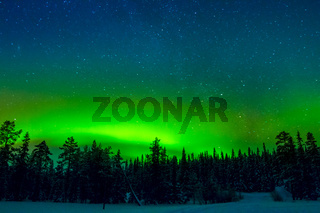 Bright Northern Lights above the Winter Forest