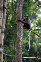 Monkey on a tree in a zoo