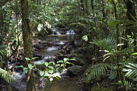 Mountain stream in wet montane forest of Kinabalu National Park, Borneo, Malaysia