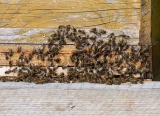 Beekeeping with wooden beeyards