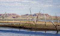 Dead trees at the swamp of Lake Argyle with a group of magpie goose and mountains in the background at the outback in Australia – wallpaper
