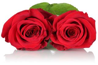 Rote Rosen zum Valentinstag, Muttertag oder Geburtstag