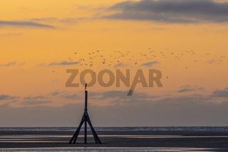 Oranger Abendhimmel am Meer mit einem Vogelschwarm